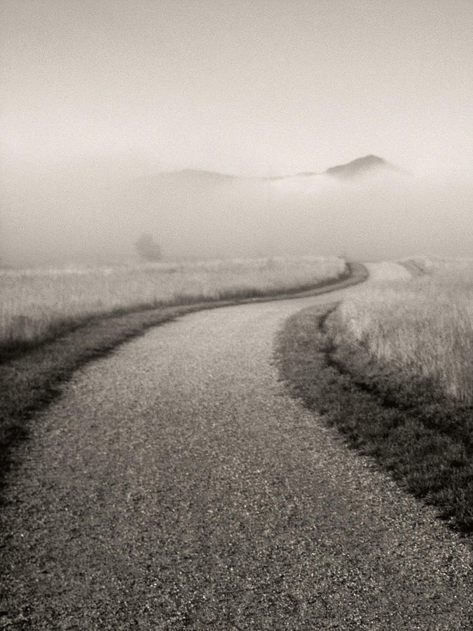 Winding Path And Mist Photograph