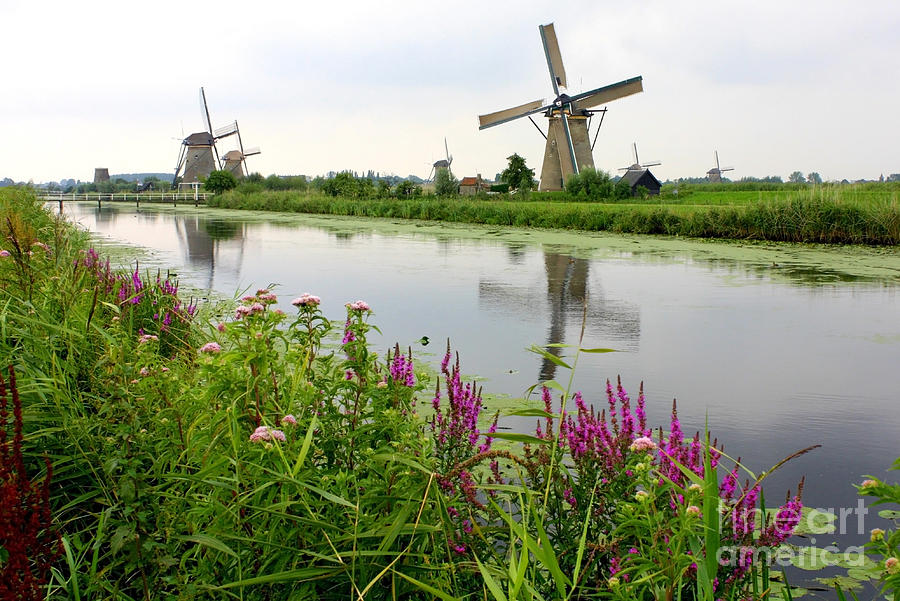 Windmills Of Kinderdijk With Wildflowers Photograph  - Windmills Of Kinderdijk With Wildflowers Fine Art Print