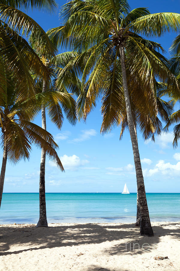 Window On The Caribbean Photograph