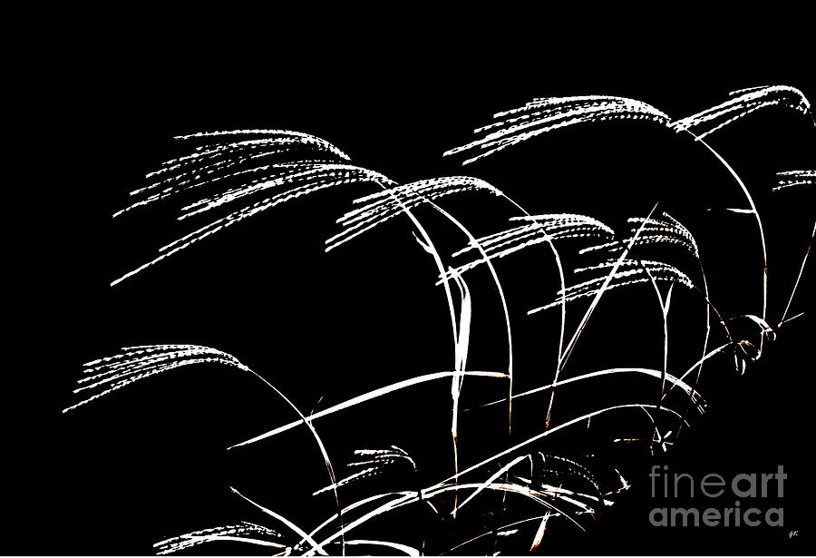 Windswept Grasses Photograph  - Windswept Grasses Fine Art Print