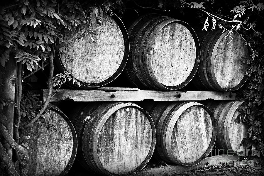 Wine Barrels Photograph