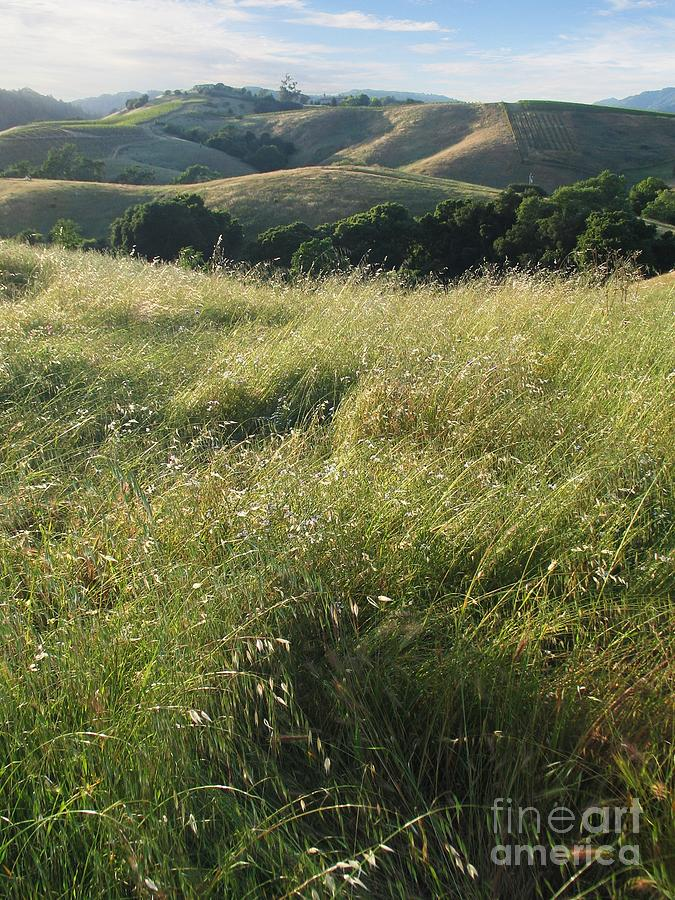 Wine Country Hills Photograph