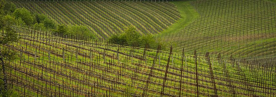 Wine Photograph - Wine Design by Jean Noren