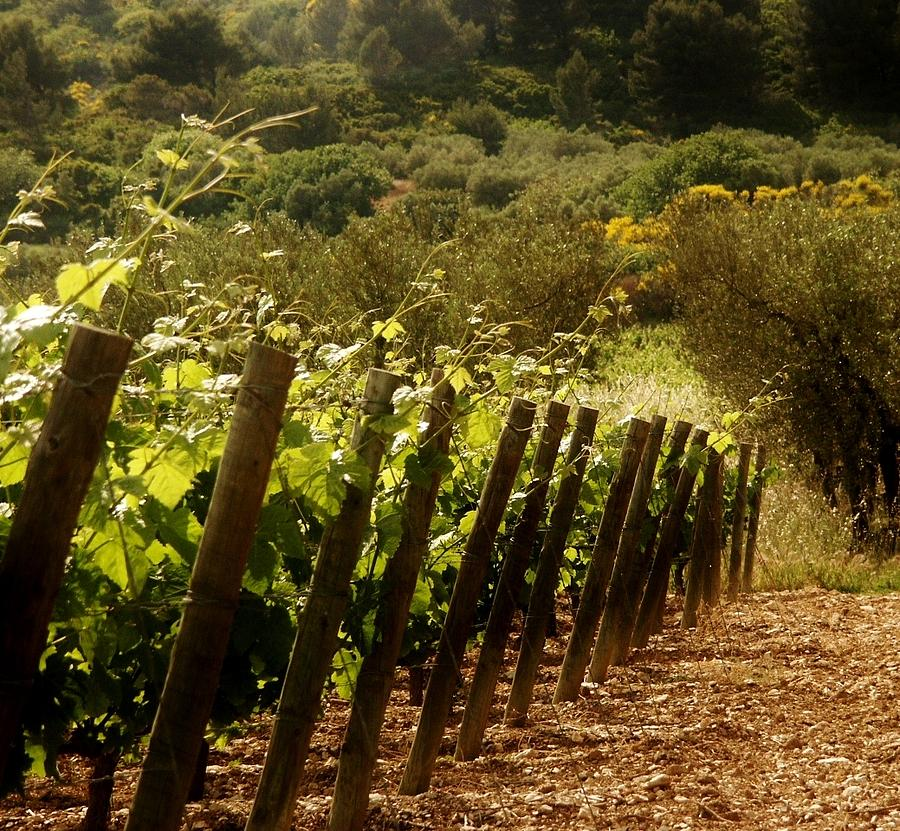 Wine Photograph - Wine Growing Pouring And Enjoying  by Christine Burdine