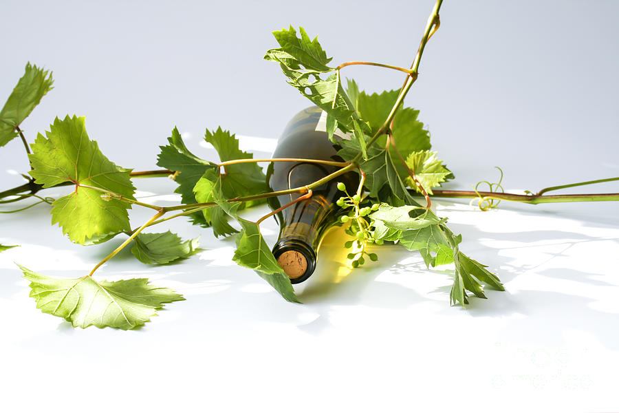 Agriculture Photograph - Wine by Patricia Hofmeester