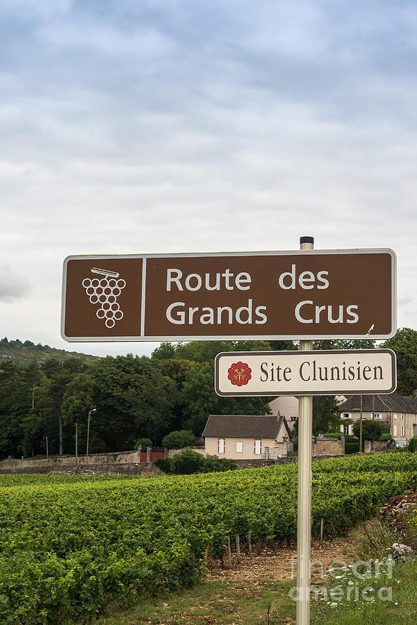 Wine Route Sign In France Photograph