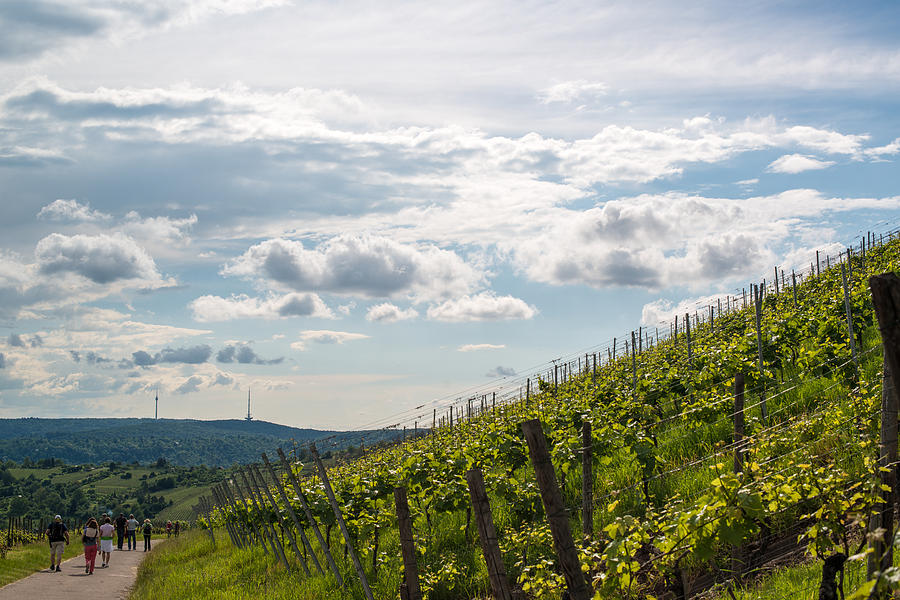 Wine Tour In Uhlbach Near Stuttgart - Germany Photograph