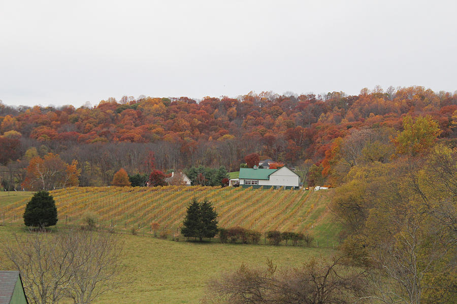 Countryside Photograph - Winery In Virginia At Fall by Renee Braun