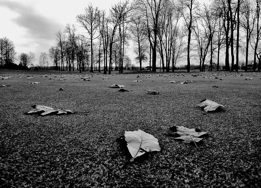 Winter Beckons Photograph