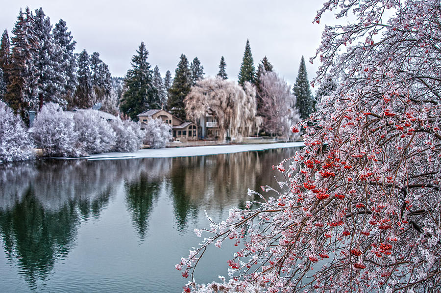 Winter Berries Photograph