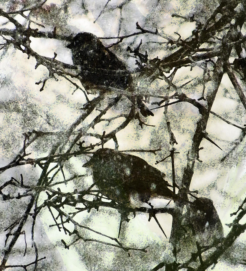 Winter Birds Photograph  - Winter Birds Fine Art Print