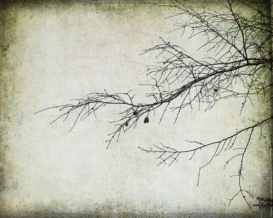 Winter Branch Photograph