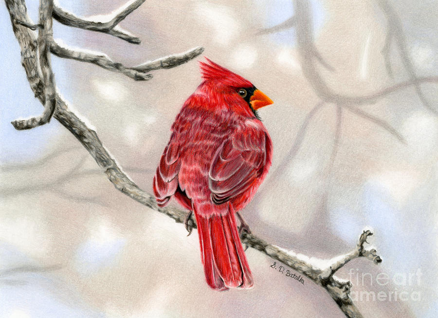 Winter Cardinal is a painting by Sarah Batalka which was uploaded on ...