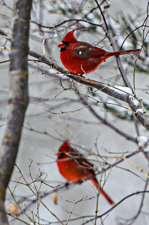 Animals Photograph - Winter Cardinals by Susan Leggett
