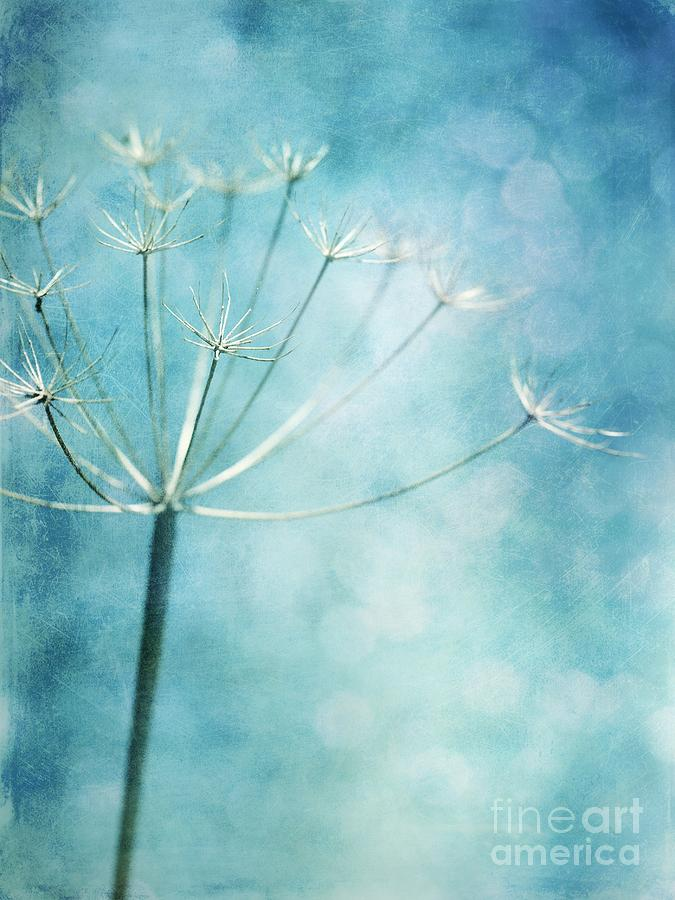 Winter Colors Photograph  - Winter Colors Fine Art Print