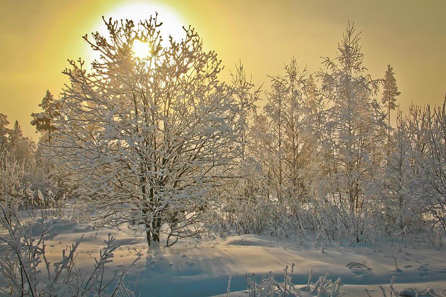 Winter Dawn Photograph