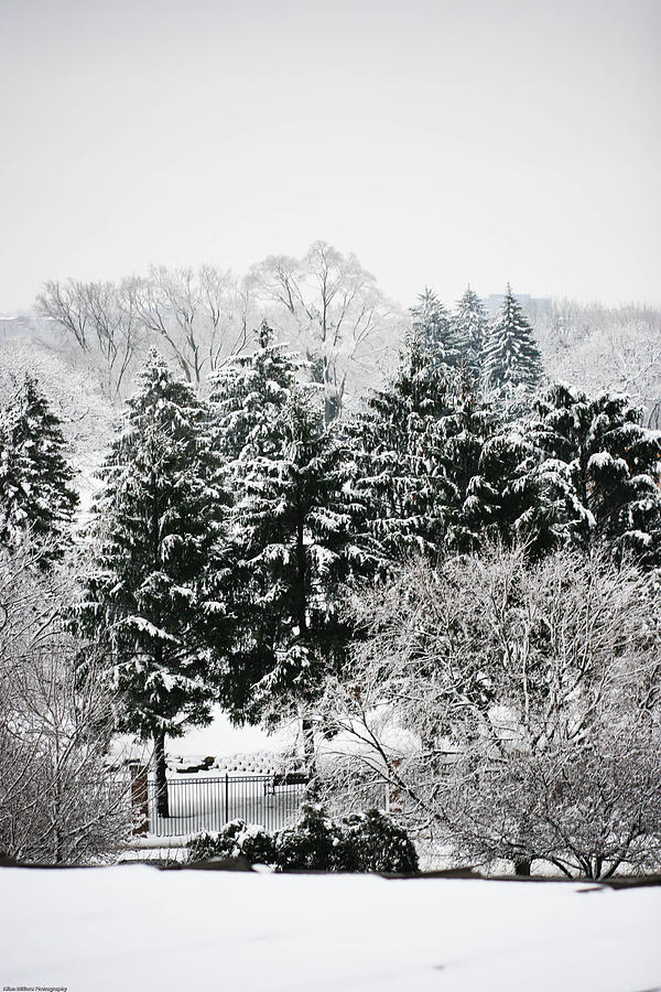Winter Dream Photograph  - Winter Dream Fine Art Print