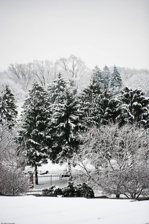 Winter Dream Photograph - Winter Dream by Allan Millora