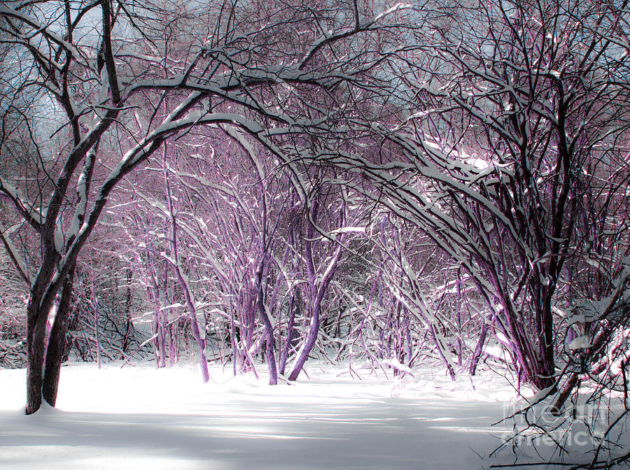 Winter Faeries Photograph
