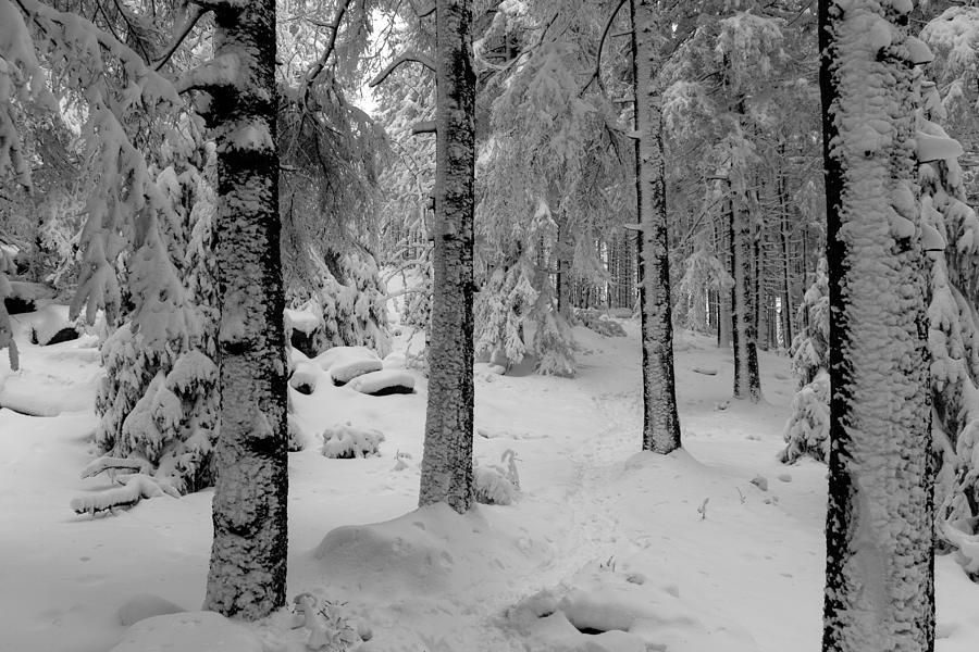 Winter Fairy Tale Forest Photograph