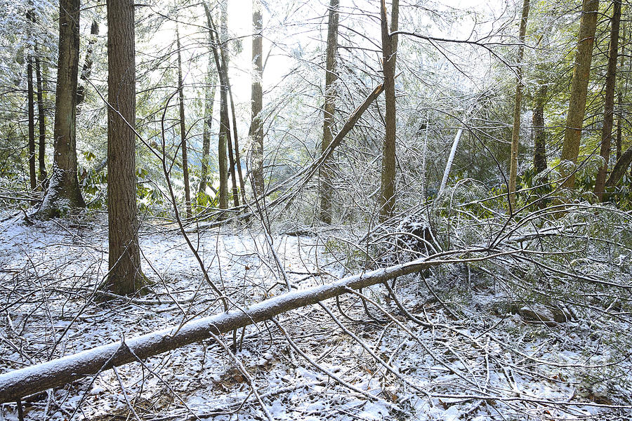 Winter Fallen Tree Photograph  - Winter Fallen Tree Fine Art Print
