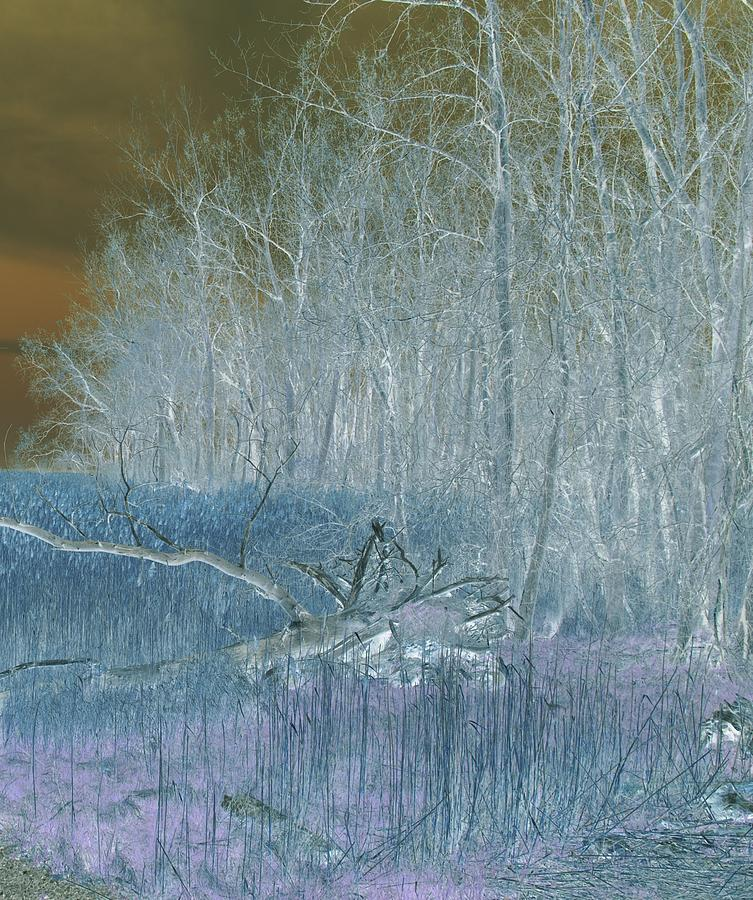 Winter Feel B Photograph  - Winter Feel B Fine Art Print
