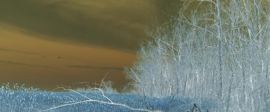 Winter Feel C Photograph