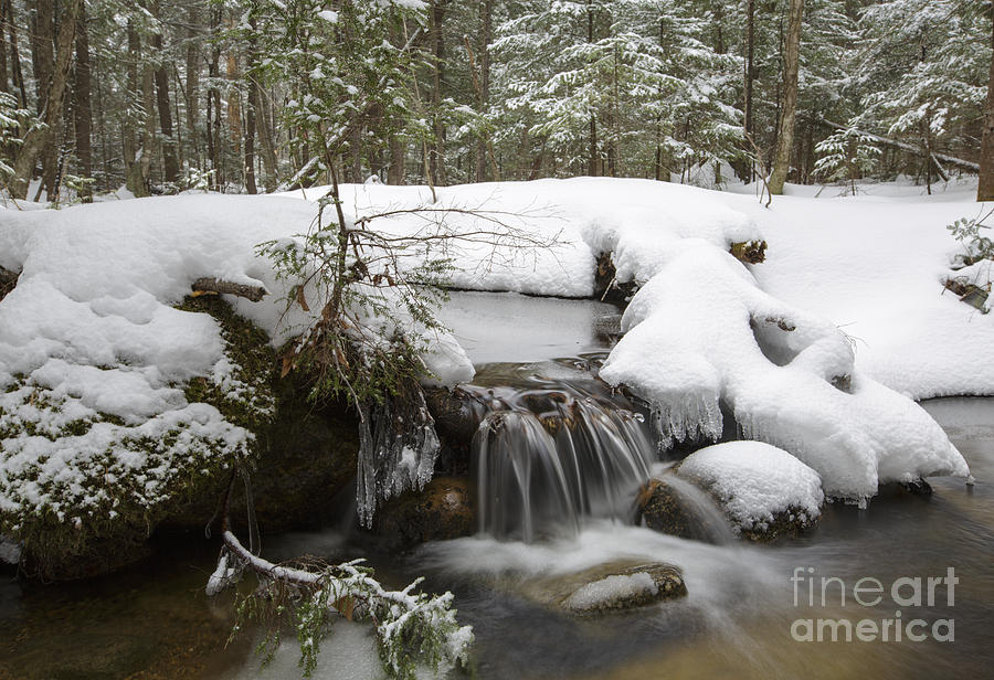 Winter Forest - Lincoln New Hampshire Usa Photograph