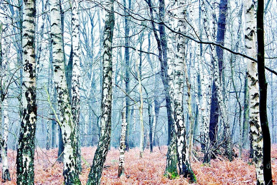 Winter Forest 2 Photograph