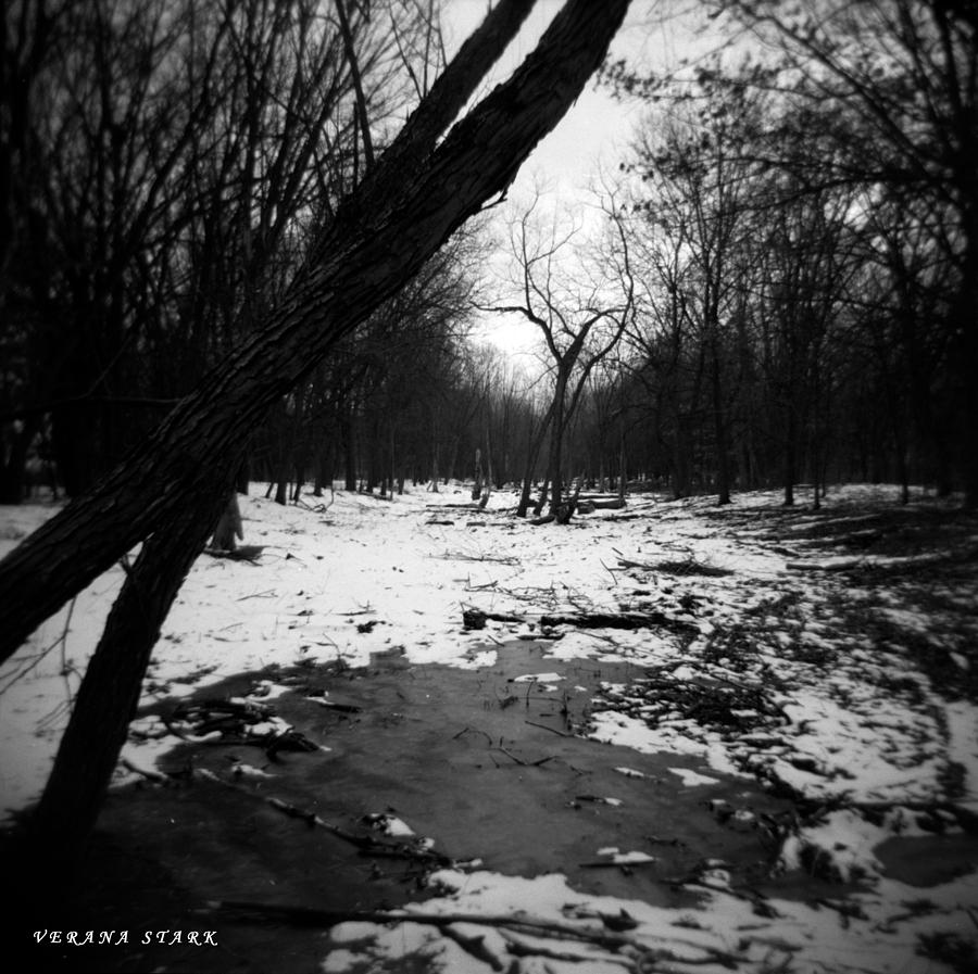 winter forest black and white HD wallpaper |Winter Forest Black And White