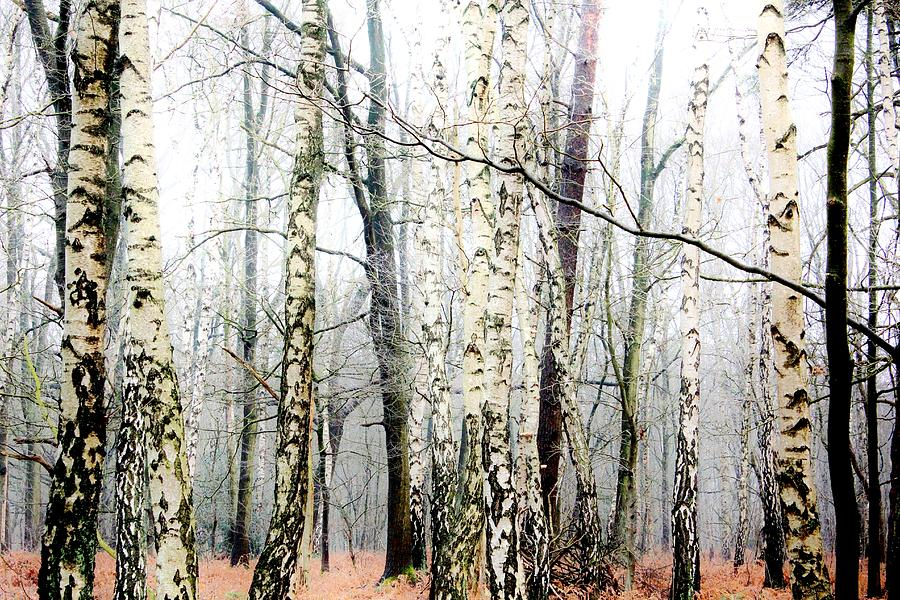 Winter Forest Photograph  - Winter Forest Fine Art Print