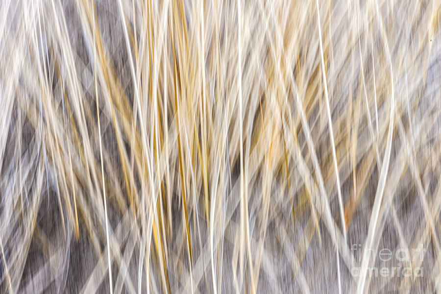 Winter Grass Abstract Photograph