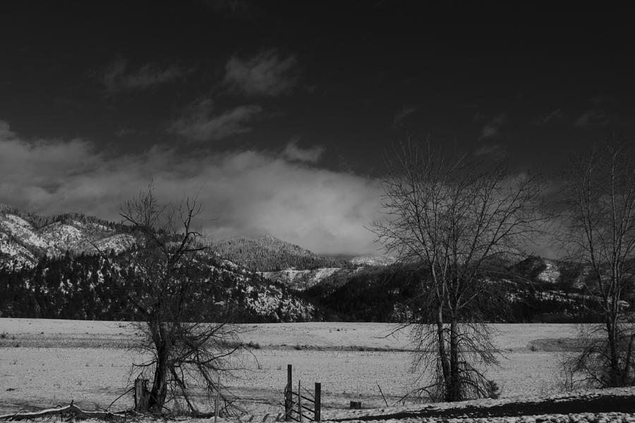 Winter In Black And White Photograph by Dorothy Hall