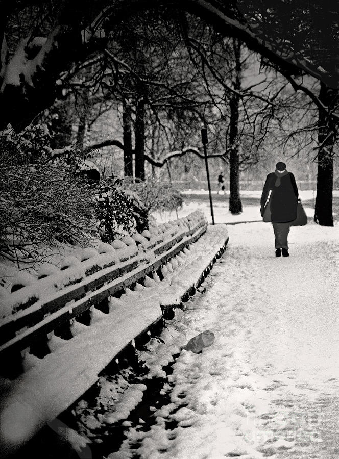 Winter In Central Park Photograph