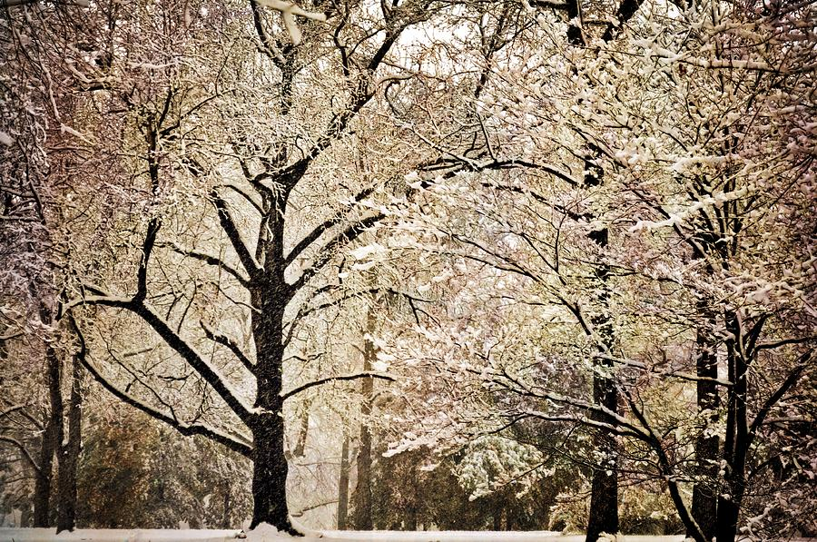 Winter In St. Louis Photograph  - Winter In St. Louis Fine Art Print