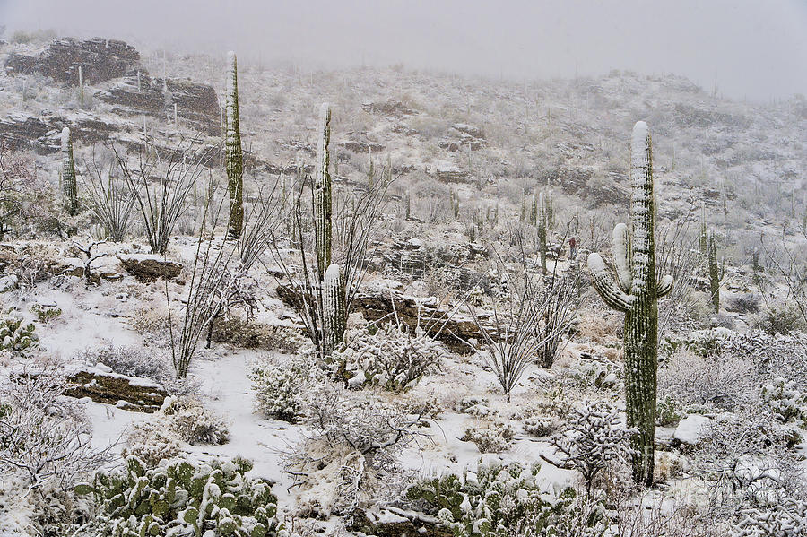 Winter In The Desert Photograph