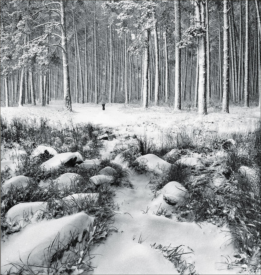 Landscape Photograph - Winter Is Here by Vladimir Kholostykh