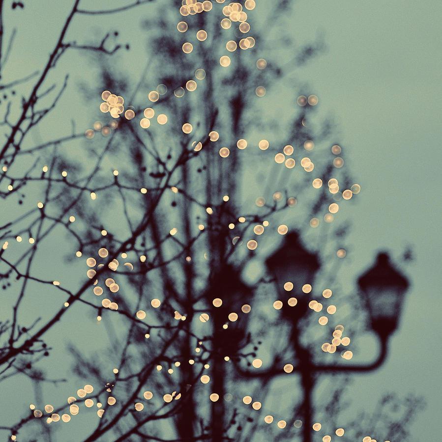 Winter Lights Elle Moss