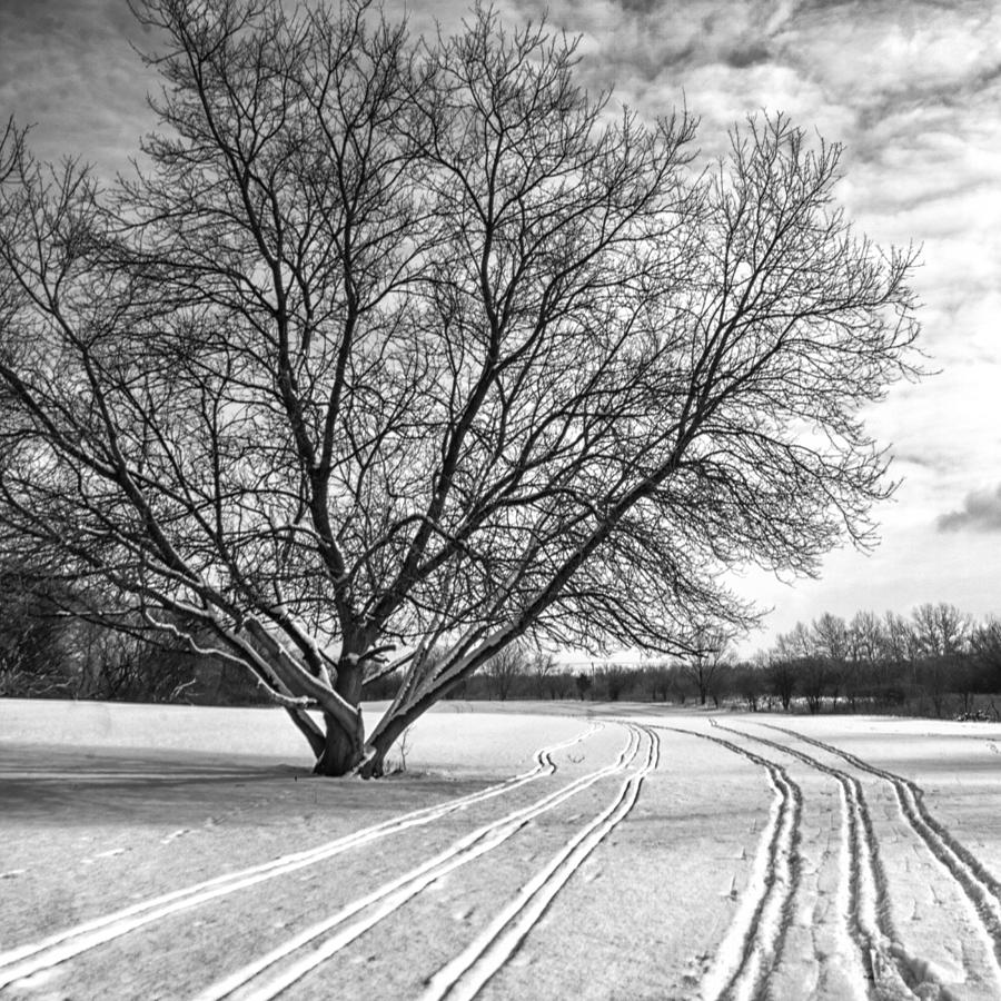 Winter Lines Photograph  - Winter Lines Fine Art Print