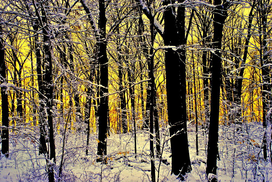 Winter Mood Lighting Photograph  - Winter Mood Lighting Fine Art Print