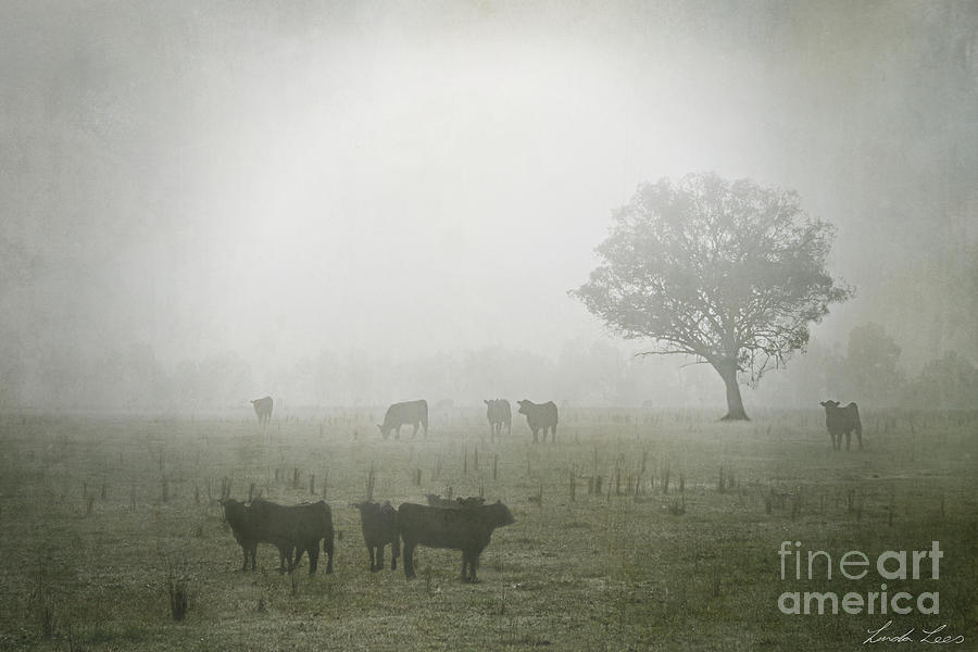 Winter Morning Londrigan 5 Photograph  - Winter Morning Londrigan 5 Fine Art Print