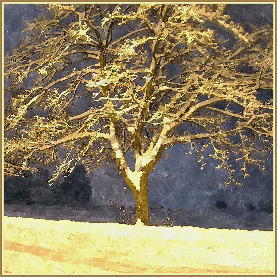 Winter Night - Snowy Tree Photograph