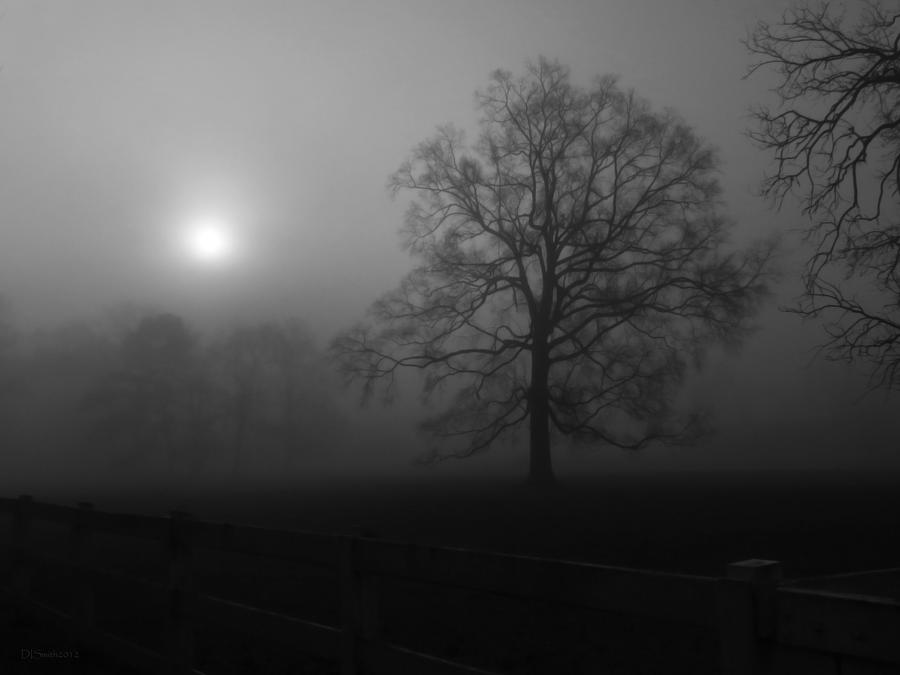 Winter Oak In Fog Photograph