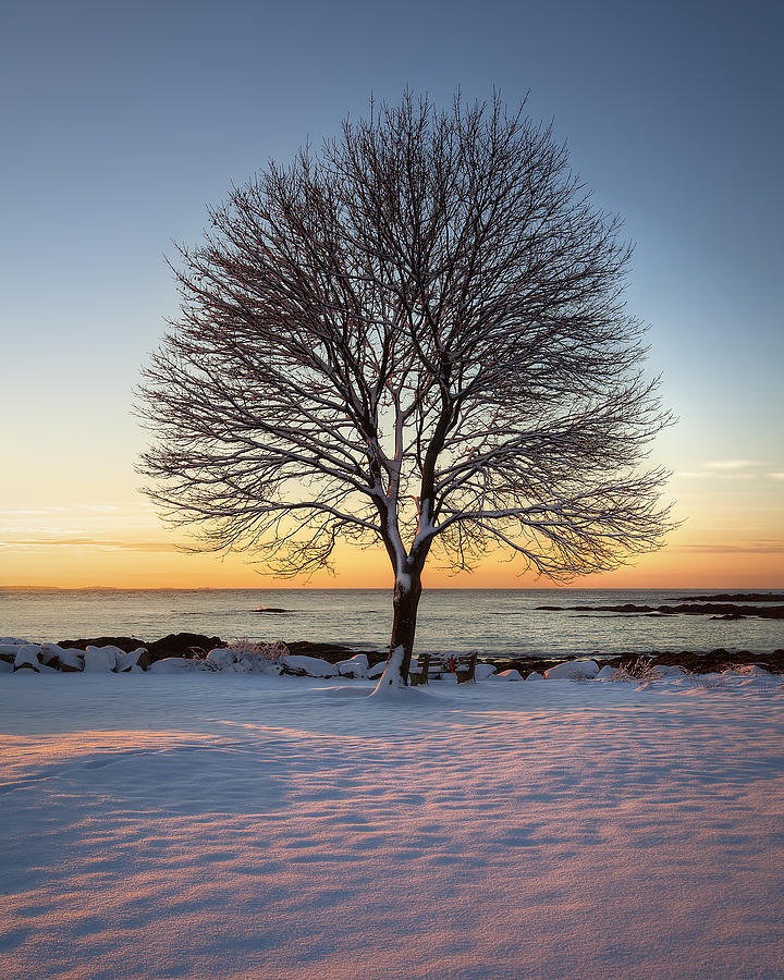 Winter On The Coast Photograph  - Winter On The Coast Fine Art Print