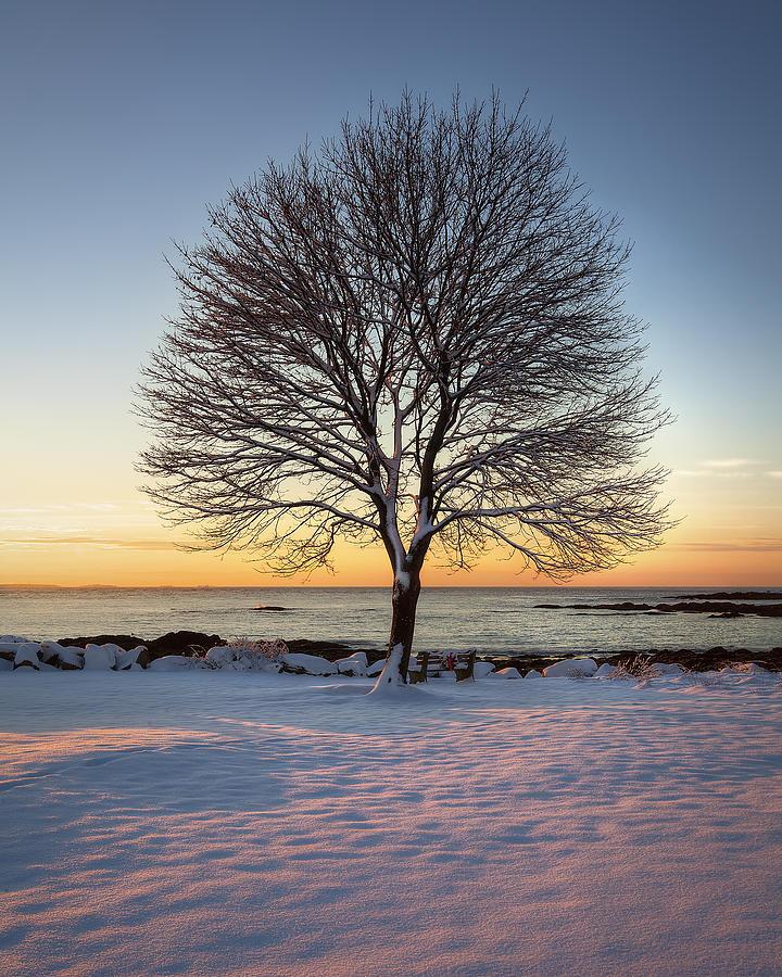 Winter On The Coast Photograph