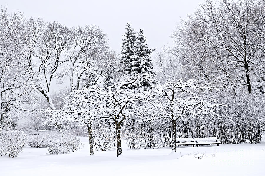 Winter Park Landscape Photograph  - Winter Park Landscape Fine Art Print