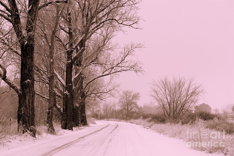 Winter Pink Photograph  - Winter Pink Fine Art Print