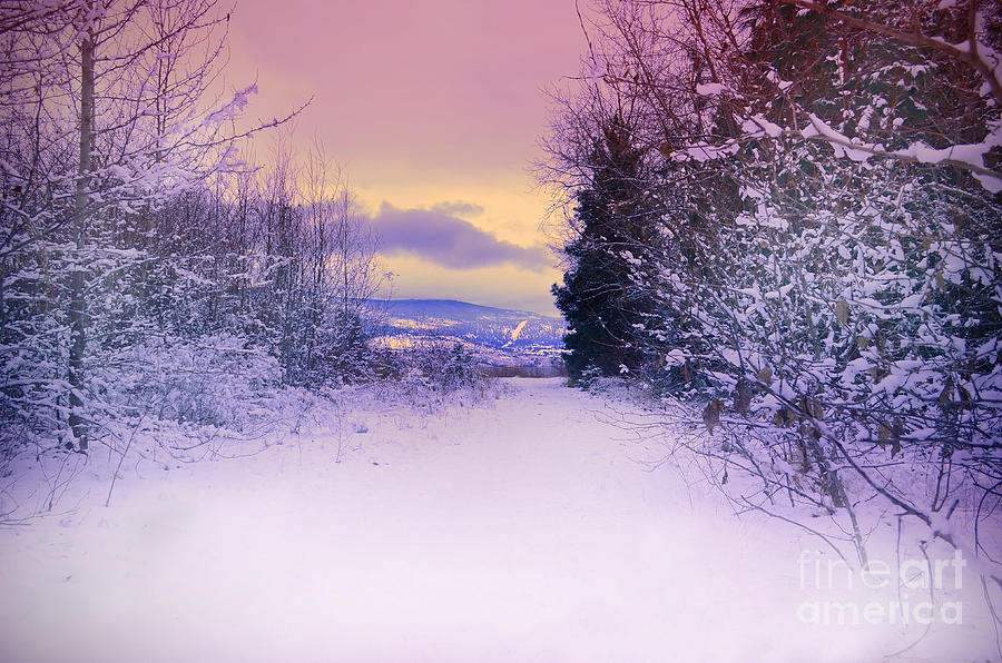 Winter Skies Photograph  - Winter Skies Fine Art Print