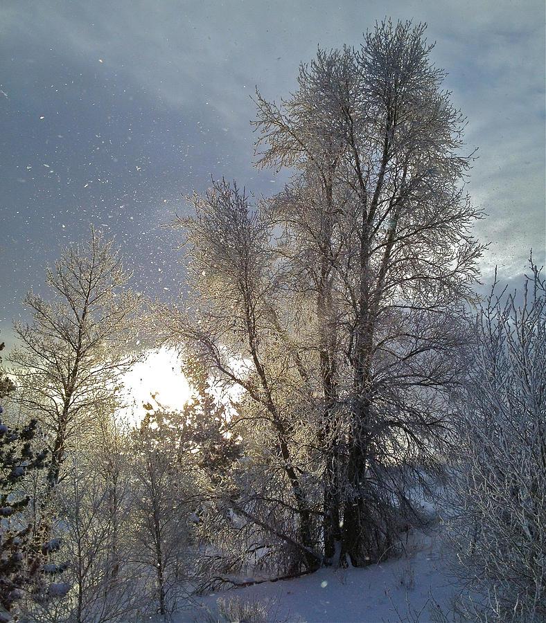 Winter Sky Photograph