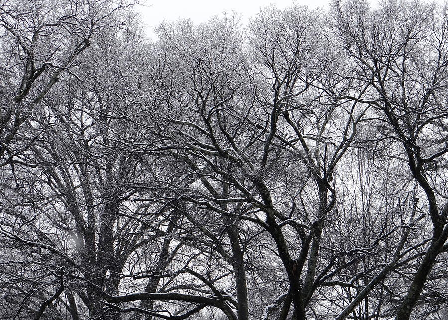 Winter Storm Photograph  - Winter Storm Fine Art Print